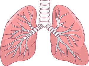lungs_illustration